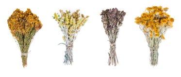 Diverso colgante mágico fresco de las hierbas aislado en el fondo blanco Fotos de archivo