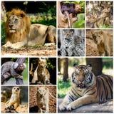 Diverso collage animal Fotos de archivo