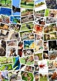 Diverso collage de los animales en las postales Imagen de archivo libre de regalías