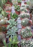 Diverso de cactus Fotografía de archivo