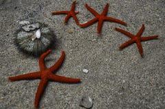 Diverso estrela do mar que coloca na areia imagem de stock royalty free