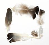 Diverso marco de las plumas Imagenes de archivo
