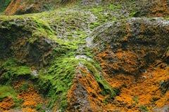 Diverso musgo en roca fotografía de archivo
