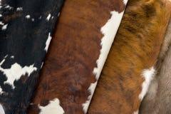 Diverso pele diferente da vaca, textura do teste padrão Foto de Stock