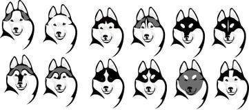 Diverso perro esquimal de la cabeza de las opciones del color Foto de archivo libre de regalías