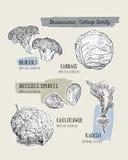 Diverso sistema de la col col, bróculi, coles de Bruselas, cauli ilustración del vector