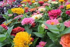Diverso tipo de imagen de las flores Imagenes de archivo