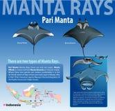 Diverso tipo de Infographic de rayos de Manta Imagen de archivo