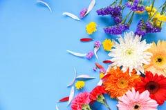 Diverso tipo de la primavera del verano de las flores del marco de la composición de la planta tropical del gerbera de la flor co fotografía de archivo libre de regalías