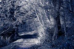 Diversos árboles se colocan sin follaje a lo largo de la pequeña trayectoria fotografía de archivo