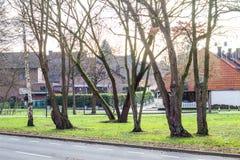 Diversos árboles se colocan sin follaje a lo largo de la pequeña trayectoria fotos de archivo