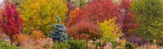 Diversos árboles y arbustos con las hojas varicolored del otoño imágenes de archivo libres de regalías