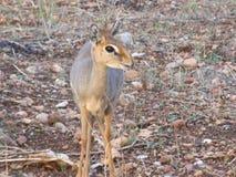 Diversos animales en ?frica en safari en Kenia fotografía de archivo