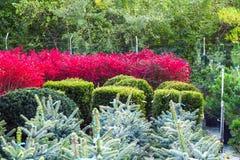 Diversos arbustos y árboles en los potes vendidos en centro de jardinería fotografía de archivo libre de regalías