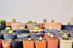 Diversos cactus verdes, planta espinosa en potes imagen de archivo
