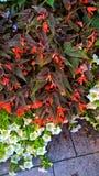 Diversos colores de diversas flores fotos de archivo