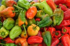 Diversos colores del paprika Foto de archivo libre de regalías