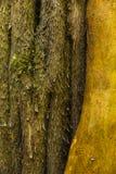 Diversos colores en tronco de árbol fotografía de archivo libre de regalías