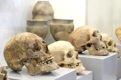 Diversos crânios humanos velhos em apoios cinzentos Pratos antigos da cerâmica no fundo Estoque para a celebração da noite dentro fotografia de stock