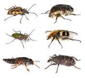 Diversos escarabajos aislados en el fondo blanco. Imagen de archivo libre de regalías