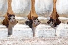 Diversos gatinhos pequenos que vivem no porão fotos de stock royalty free