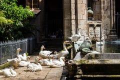 Diversos gooses brancos perto de um lago dentro da jarda do castelo Fotos de Stock Royalty Free