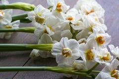 Diversos narciso brancos bonitos estão na madeira foto de stock