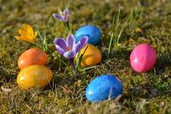 Diversos ovos da páscoa coloridos que encontram-se na grama com açafrões Fotografia de Stock