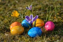 Diversos ovos da páscoa coloridos que encontram-se na grama com açafrões Fotografia de Stock Royalty Free