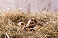 Diversos ovos de codorniz colocados no monte de feno Foto de Stock