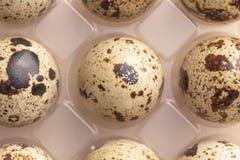 Diversos ovos de codorniz no empacotamento plástico imagem de stock royalty free