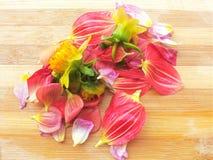 Diversos pétalos coloreados de la flor de la dalia apilan en fondo de madera Fotografía de archivo