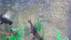 Diversos peixes em um grande tanque 1 video estoque