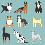 Diversos perros Imágenes de archivo libres de regalías