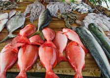 Diversos pescados recién pescados en contador de madera foto de archivo