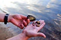 Diversos shell pequenos na palma do fundo da água imagens de stock
