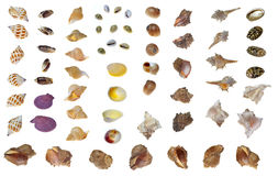 Diversos shelles Foto de archivo