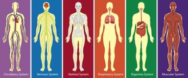 Diversos sistemas de diagrama del cuerpo humano Imagenes de archivo