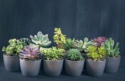 Diversos succulents Imagen de archivo