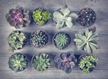 Diversos succulents Fotos de archivo