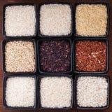 Diversos tipos de arroz Imágenes de archivo libres de regalías