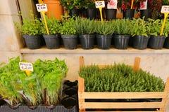 Diversos tipos de hierbas frescas en los potes para la venta Imagen de archivo