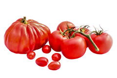 Diversos tomates rojos aislados en blanco Fotos de archivo libres de regalías