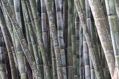 Diversos troncos do bambu verde fotografia de stock