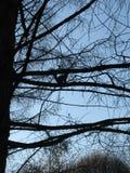 Divertente poco scoiattolo su un ramo di albero, siluetta fotografia stock libera da diritti