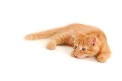 Divertido del gatito aislado en el fondo blanco fotografía de archivo libre de regalías