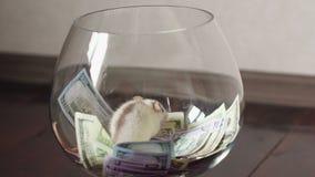 Divertido una rata con mucho dinero, pero sin la libertad almacen de video