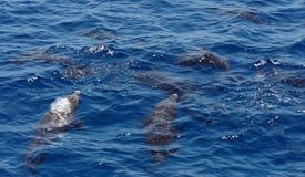 Divertimento al Mar Rosso Immagini Stock Libere da Diritti
