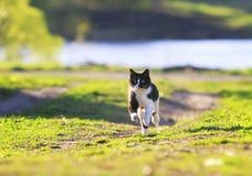 Divertimento bonito do gato que corre no prado ensolarado verde foto de stock royalty free