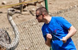 Divertimento com uma avestruz Fotografia de Stock